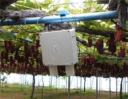 Symphodia Phil's monitoring system