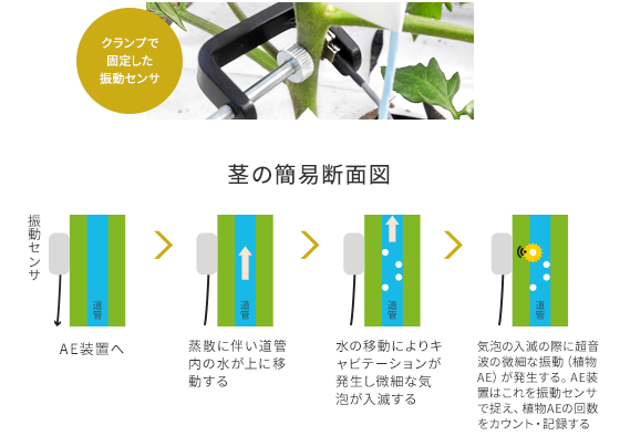 茎の簡易断面図